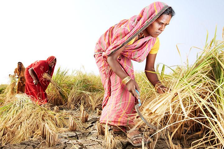 Fonte: krishijagran.com