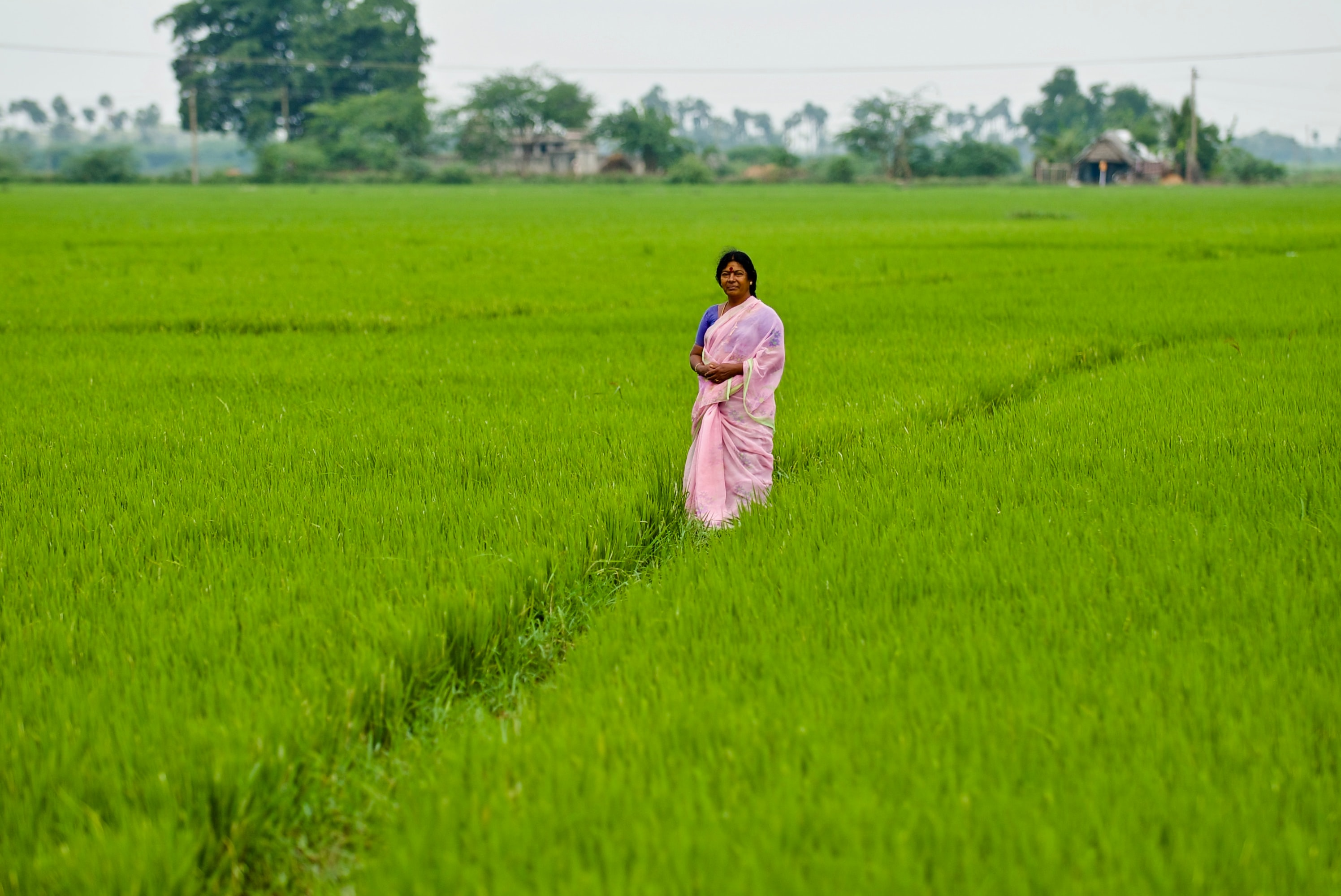 India_woman_ricefield