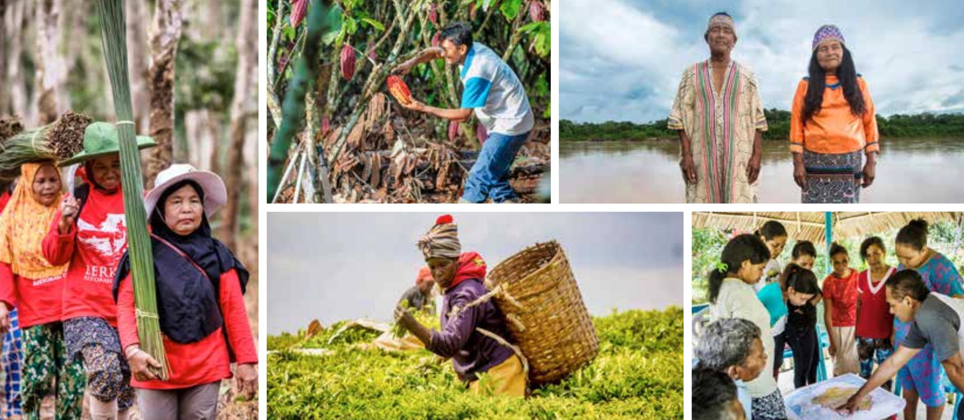 Global Landscapes Forum Bonn 2019 cover image