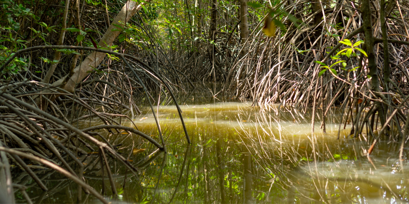 A vital mangrove forest hidden in Vietnam's largest city could be at risk
