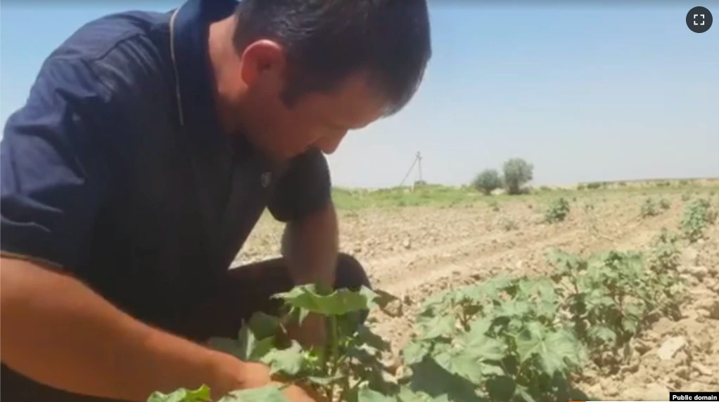 Uzbek Farmers Unhappy With President's Order Giving Land To Jobless Youth