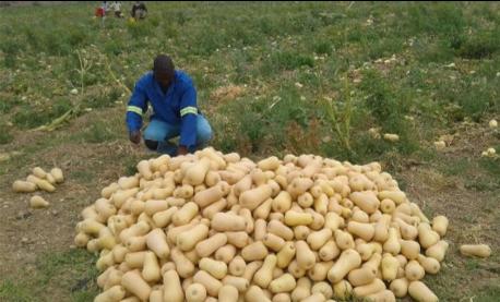 Nwanedi farmer in South Africa
