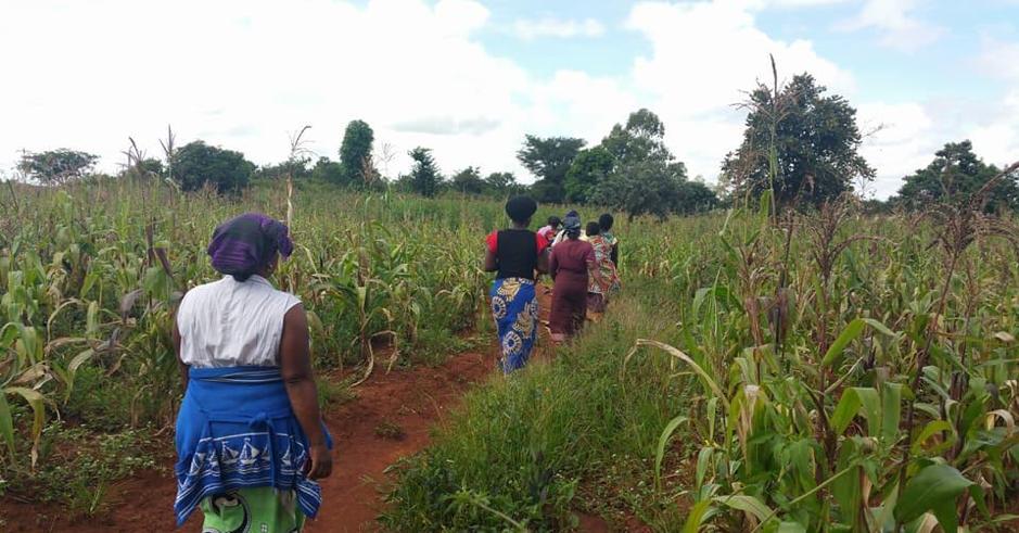 Women farmers walking through the field in Zambia