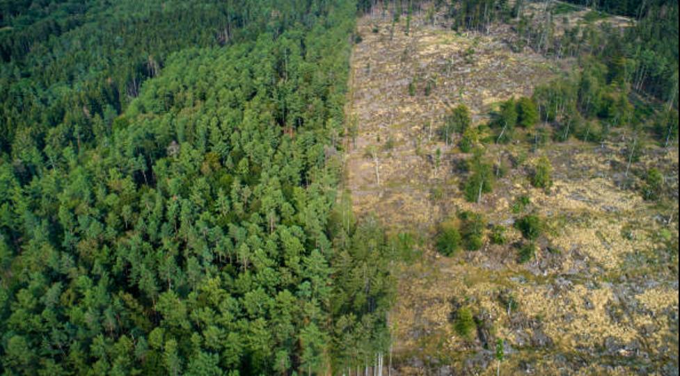 Uncontrolled deforestation