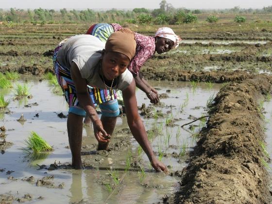 Women working in irrigated rice fields in Bagre, Burkina Faso © Global Water Initiative