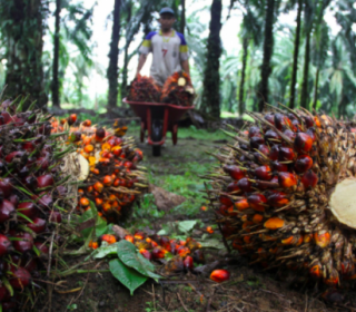 Opportunities for Malaysian palm oil companies to cultivate African land, says Bidco Africa group co-founder