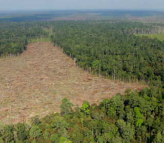 Deregulation law 'raises corruption risk' in Indonesia's forestry sector