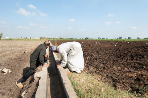 Egypt irrigation