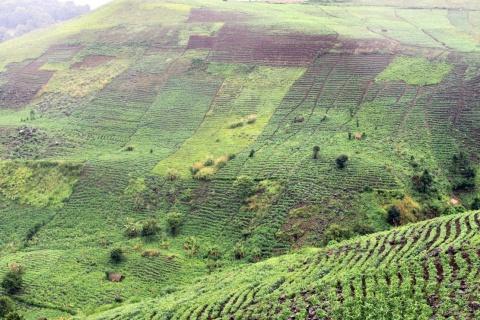paysage1.jpg