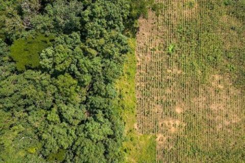 2503-64894-quelques-conseils-aux-investisseurs-pour-reduire-le-risque-foncier-dans-leurs-projets-agricoles-odi_L.jpg