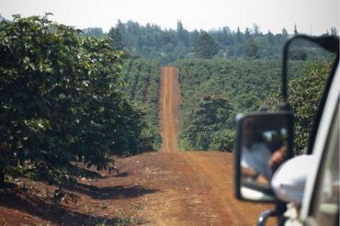 2703-64984-kenya-les-petites-exploitations-cafeieres-beneficieront-d-un-fonds-de-30-millions_M.jpg