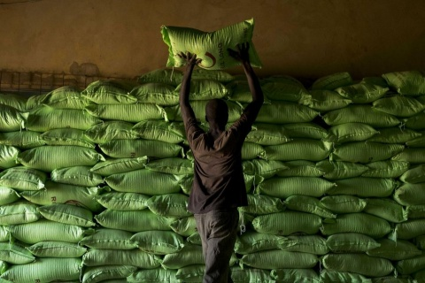 original_1212318-rice-harvest-and-processing-as-west-africa-s-appetite-for-rice-grows.jpg