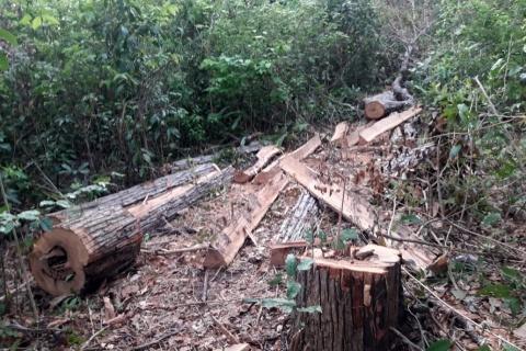 Foto: Guardiões da Floresta Guajajara