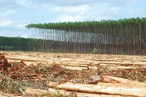 Através do levantamento será possível saber o quanto as florestas impactaram na agropecuária do municípioAtravés do levantamento será possível saber o quanto as florestas impactaram na agropecuária do município - Arquivo/JPNEWS