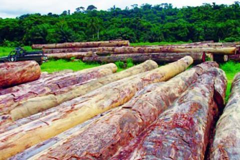 Em quase toda a província muitas árvores são derrubadas de forma anárquica  Fotografia: António Soares   Edições Novembro