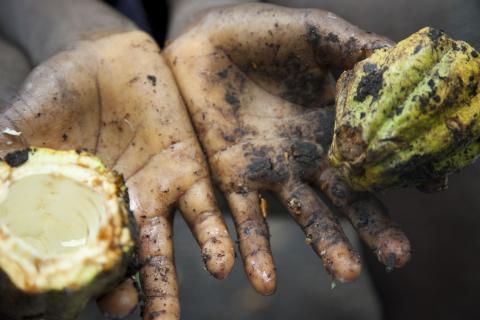 liberia agriculture