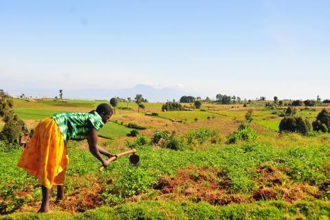 uganda agriculture