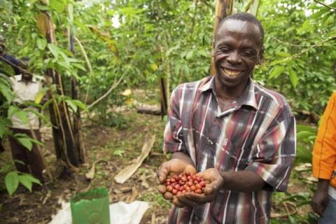 Coffee in Uganda