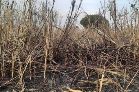 Alleged land grabbers torch ex-minister's sugarcane plantation