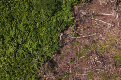 Until now, the climate change debate in Central Africa has focused on the forest sector. CIFOR/Axel Fassio