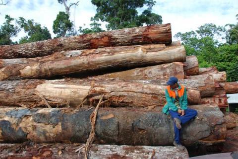 Desmatamento na Amazônia. JOS BARLOW