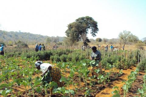Food Garden, photo by DFAT 2011