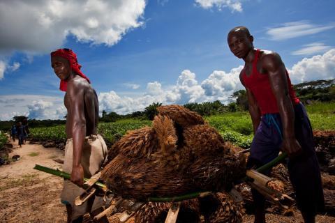 DRC_Lokutu-oil-palm-plantation_Feronia LOW.jpg