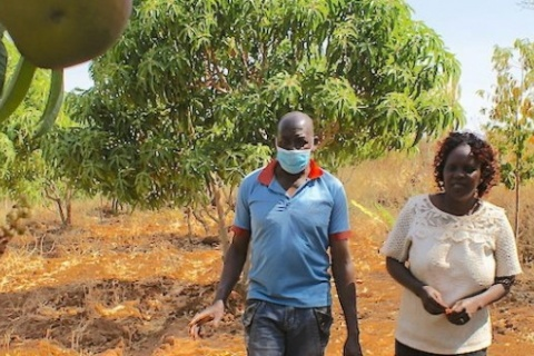 Farmers regreen Kenya's drylands with agroforestry and an app