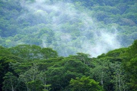 Parque Nacional Carara, en Costa Rica. EFE/Jeffrey Arguedas