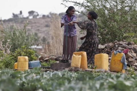 GirlsWomenCabbageFieldEthiopia_.jpg
