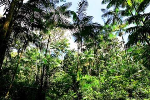 A sanção da Medida Provisória 759 estabelece novas regras para a regularização de terras da União ocupadas na Amazônia Legal