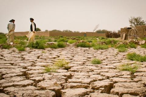 Lutte contre la désertification en Haiti