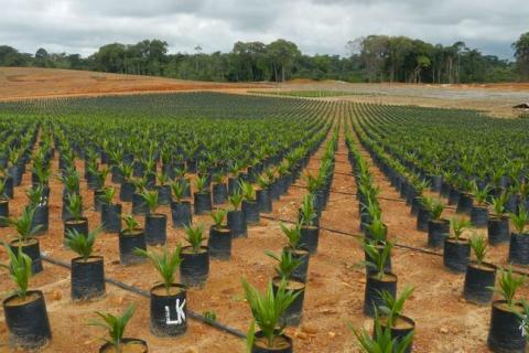 Libéria sans terres.jpg