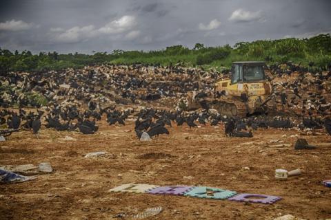 Lixão a céu aberto no município de Cruzeiro do Sul, no Acre. Foto: Roberto Herrera
