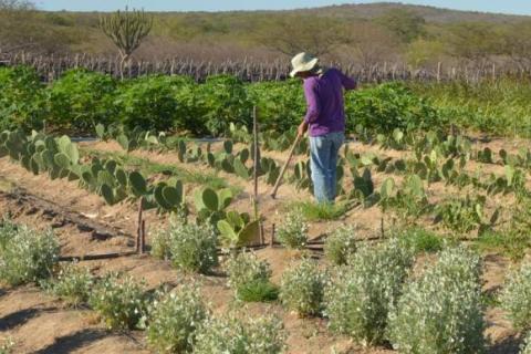 Além da MP 759, a 756 e 758 visam beneficiar o mercado de terras, especialmente a expansão das fronteiras agrícolas / Agência Brasil / Site