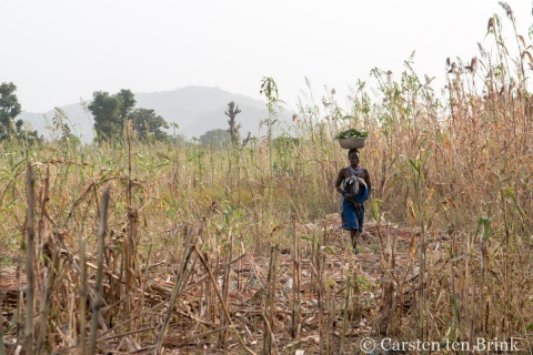 Kambari women in field-Carsten ten Brink, 2018