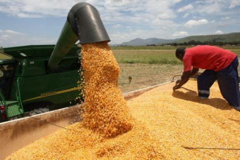 Centenas de toneladas de milho produzidas anualmente no município de Quipungo Fotografia: Arão Martins | Edições Novembro | Huíla