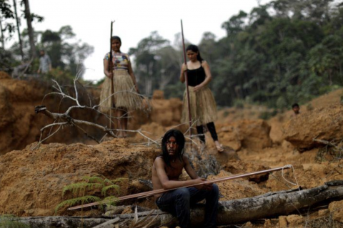 Illegal loggers uncowed by coronavirus as deforestation rises in Brazil
