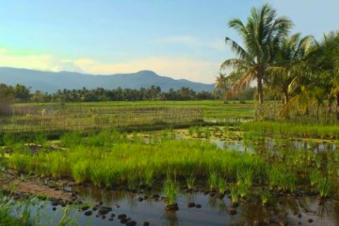 Will Cambodia's Shift in Focus to Small-Scale Farming Work?