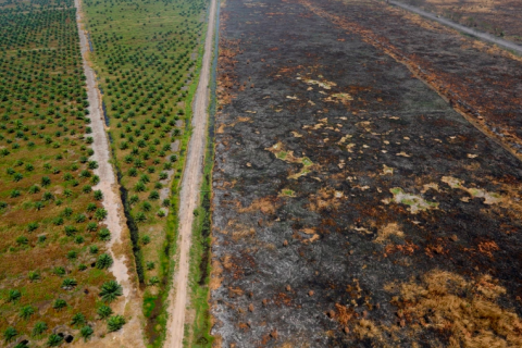 Area burned in Indonesia fires 'greater than the Netherlands'