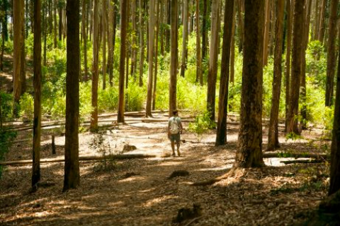 Fighting Deforestation in Sri Lanka