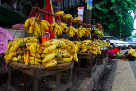 Myanmar's Kachin State Sees Boom in Chinese Banana Cultivation