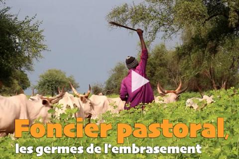 Un pasteur regarde son bétail