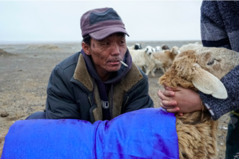 Herders Confront a Challenging New Landscape