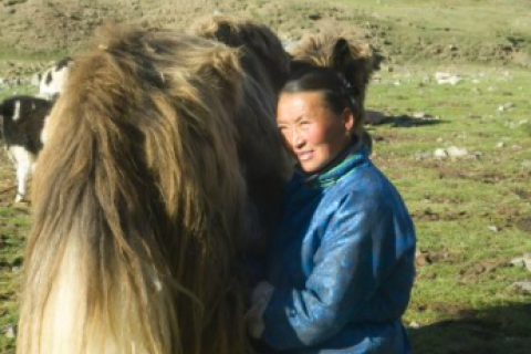Green Climate Fund invests $23.1 million towards building the climate resilience of Mongolian herder