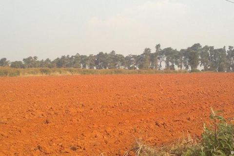 Campo de testes de sementes do ProSavana
