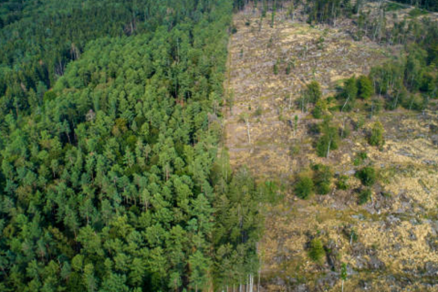 Uncontrolled deforestation