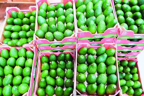 Avocados' potential to cut poverty