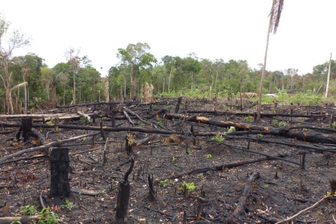 deforestation mali