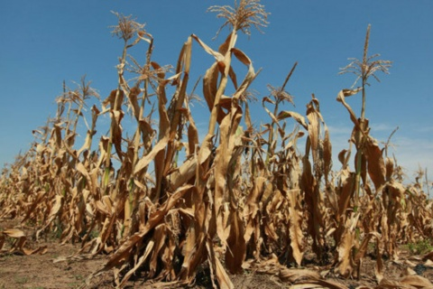 Baringo, Kwale, Laikipia, Kitui, West Pokot and Lamu are among counties at risk of severe food shortages.
